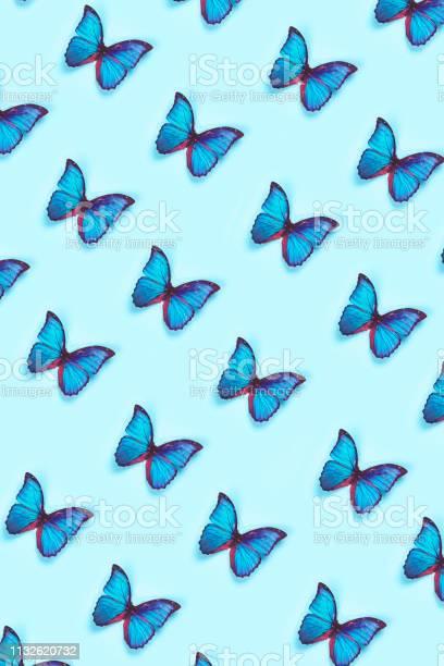 Butterfly picture id1132620732?b=1&k=6&m=1132620732&s=612x612&h=wcxatvobvr5dn1bhzwf66 9libqqag8cvcjdqc5xepa=