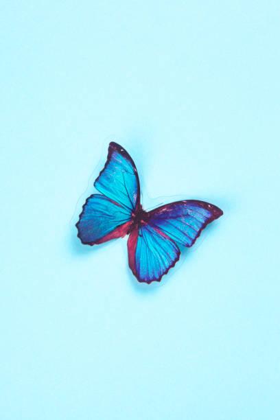 Butterfly picture id1132621005?b=1&k=6&m=1132621005&s=612x612&w=0&h=nz jd42njytrs6598 sgeqgym17ap ecmjgmwgjq4bi=