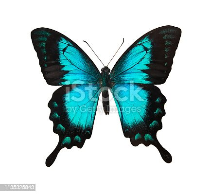 istock Butterfly 1135325843