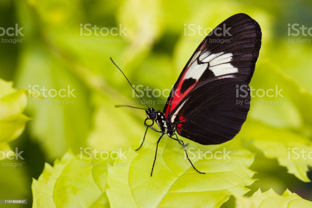 Butterfly - Royalty-free Animal Antenna Stock Photo