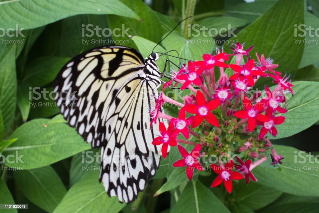 Butterfly - Royalty-free Animal Body Part Stock Photo