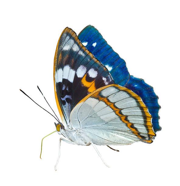 Butterfly picture id120687148?b=1&k=6&m=120687148&s=612x612&w=0&h=kslx 7yl3dt1 zc0z48 0rhz72aty3r2btgnpibj au=