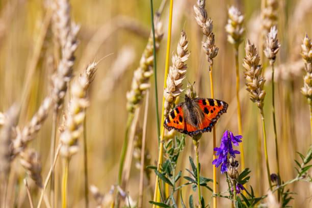 Butterfly picture id1264249026?b=1&k=6&m=1264249026&s=612x612&w=0&h=x 6m5vpbih5k8a5ag6klcmcv yfddep9mzneeutpaky=