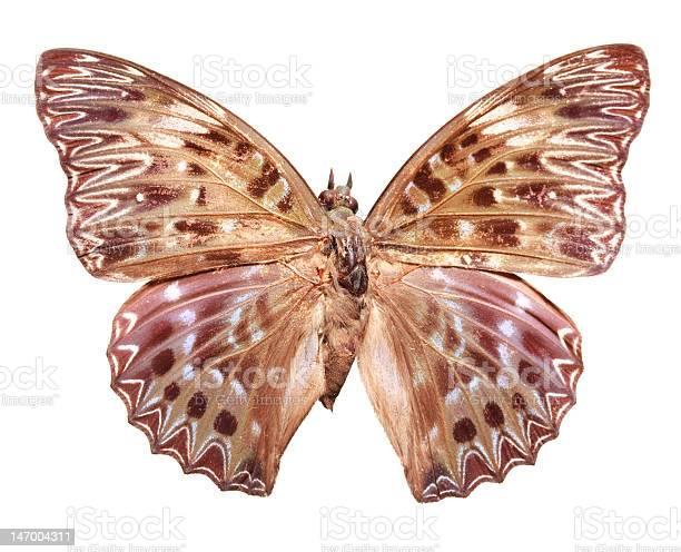 Butterfly picture id147004311?b=1&k=6&m=147004311&s=612x612&h=olcufvnrsmzejzzq3iddwnvygebul2p6aguvirqqaxg=