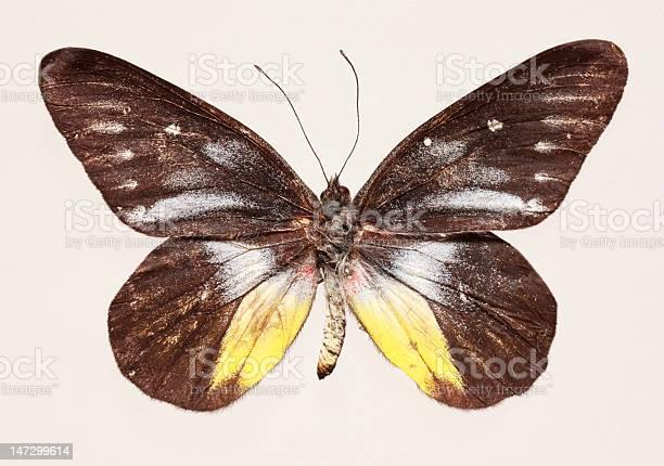 Butterfly picture id147299614?b=1&k=6&m=147299614&s=612x612&h=yyltylqsm7ekhx8iivescbtby7ruhec g097awjr1ts=