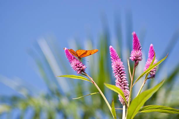 Butterfly picture id171579700?b=1&k=6&m=171579700&s=612x612&w=0&h=rtfl0okdanijcnpibhvey69pa6as ffnmjxaf9cgiy0=