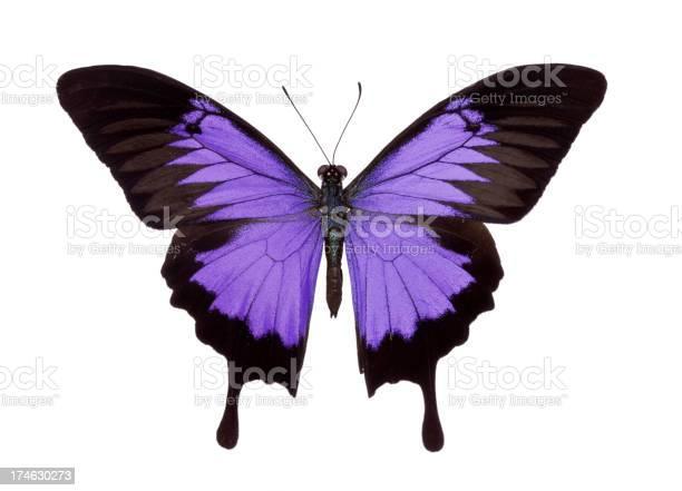 Butterfly picture id174630273?b=1&k=6&m=174630273&s=612x612&h=7vh6r9dxm2hypfz9wvrvliv2aosvc2o pil isjxf y=
