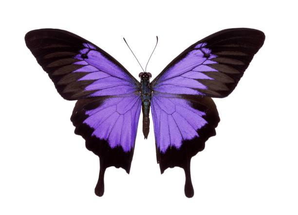 Butterfly picture id174630273?b=1&k=6&m=174630273&s=612x612&w=0&h=twafblprvpybd3tvrrhjwptvglab2rnc0c8p42dmbym=
