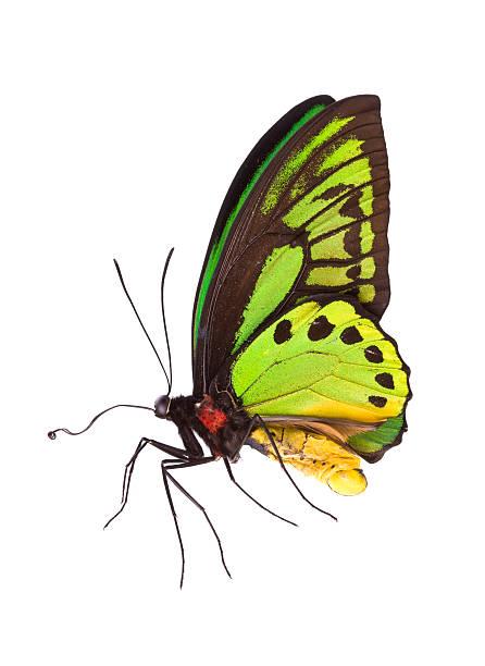 Butterfly picture id174662518?b=1&k=6&m=174662518&s=612x612&w=0&h=dl6f2u8hkngrycyugqrwi9bqpvfojhheiiipynpr3ei=