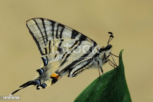istock Butterfly 187876758