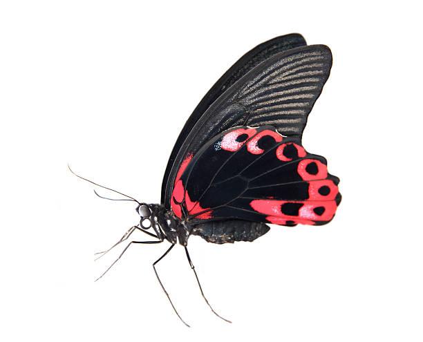 Butterfly picture id457568347?b=1&k=6&m=457568347&s=612x612&w=0&h=be0hpiqr1eqhhzr oly8coojzuihddpvfq7pq1dijam=