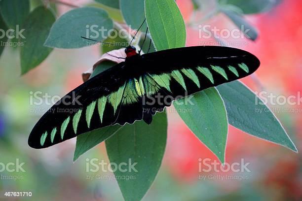 Butterfly picture id467631710?b=1&k=6&m=467631710&s=612x612&h=3nnond9rtsa9usnibyyapcgskm9jd2j9ykh3zva8ipq=