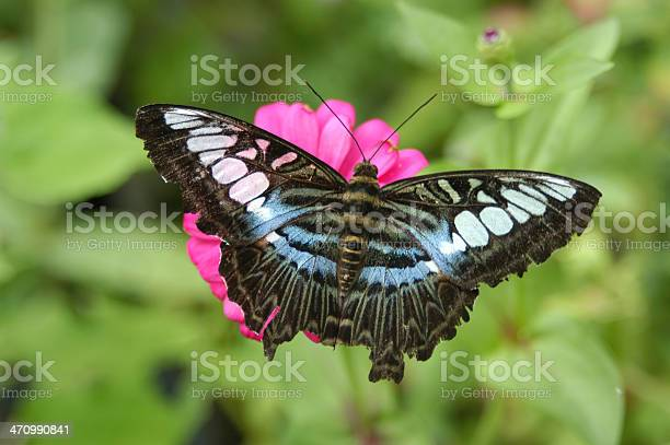 Butterfly picture id470990841?b=1&k=6&m=470990841&s=612x612&h=2gmtcnwdinv2dnmvxcaqjlynm6nknfqrnyiorkokszw=