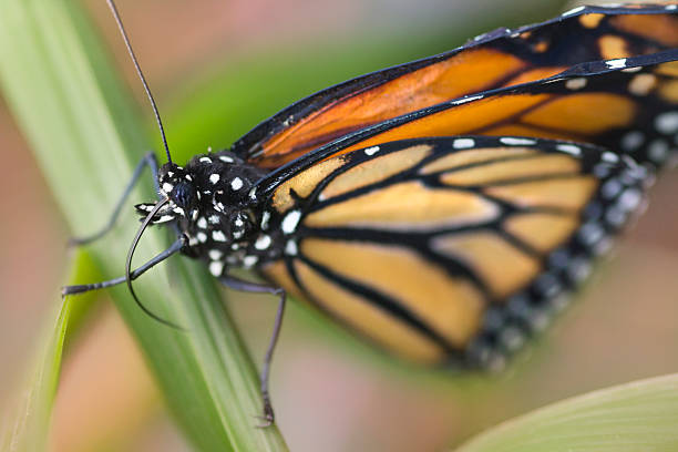 Butterfly butterfly in natural environment abjure stock pictures, royalty-free photos & images
