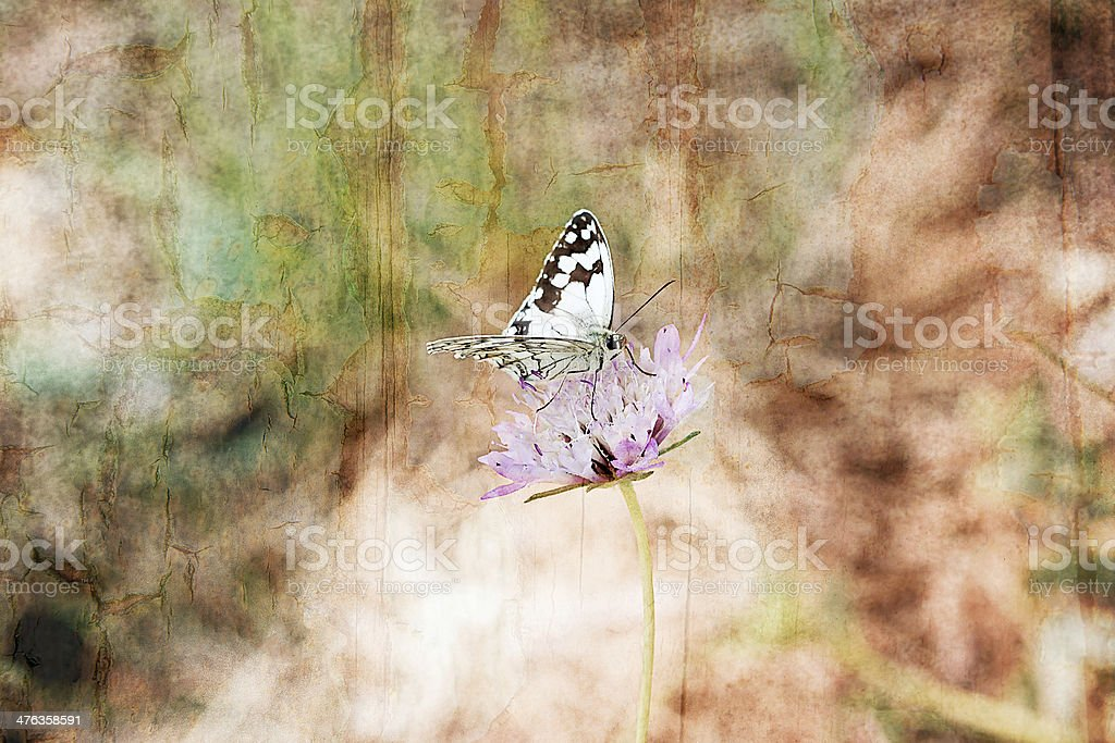 Butterfly . stock photo