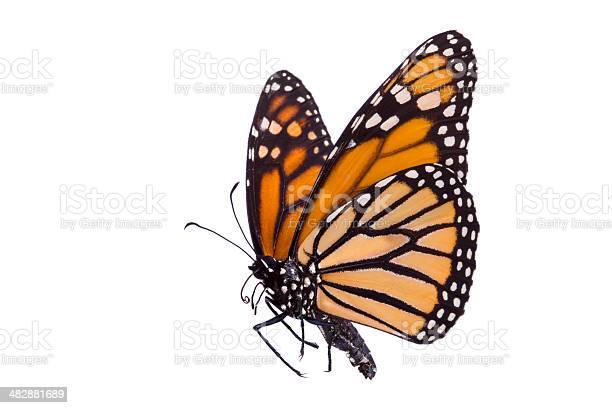 Butterfly picture id482881689?b=1&k=6&m=482881689&s=612x612&h=n9hvgj0w7viuxrijcfjyo9u xhhrwph15a3z0mr6on4=