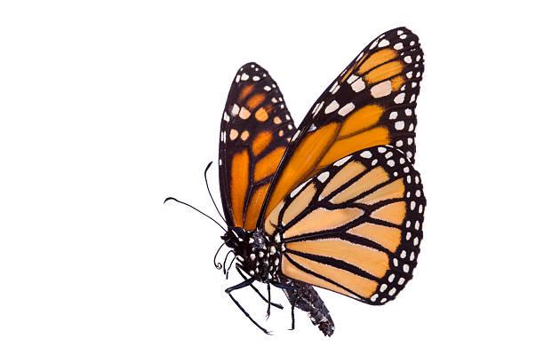 Butterfly picture id482881689?b=1&k=6&m=482881689&s=612x612&w=0&h=5jhv d7zhfz6klnikpmcu0bpgnik4fthwku6clhwnhq=
