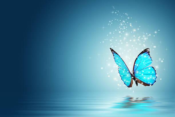 Mariposa - foto de stock