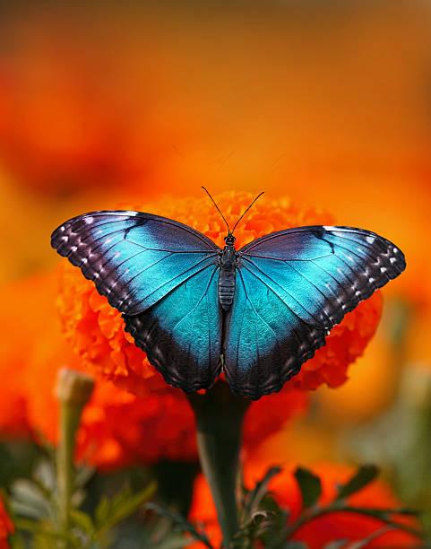 Butterfly picture id496211684?b=1&k=6&m=496211684&s=612x612&w=0&h=vegdg8apzzwoi1fq hzbyg3twhtzyv oedivihjnuhi=