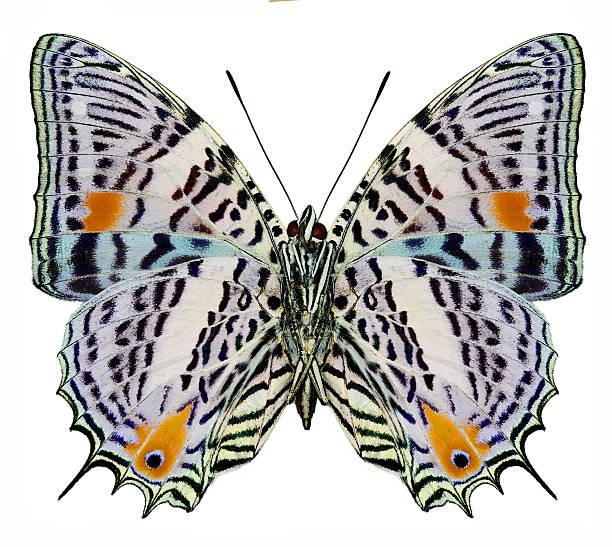 Butterfly picture id512630230?b=1&k=6&m=512630230&s=612x612&w=0&h=vhhuoe2koqp403lhtz 4se8zeqc227cczfmehubjqva=