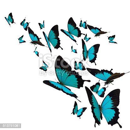 istock Butterfly 513751081