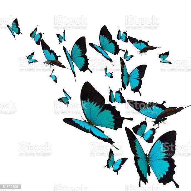 Butterfly picture id513751081?b=1&k=6&m=513751081&s=612x612&h=kfao1c xk1pjwavsclpge ko2f2awqxnbbowcgtoyji=