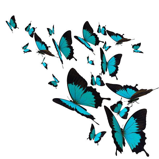 Butterfly picture id513751081?b=1&k=6&m=513751081&s=612x612&w=0&h=c7cmhr1p f9 wet71qhyn4xaapdsm8gi2qq47jyd06q=