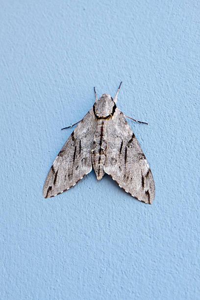 butterfly - - mehlmotten stock-fotos und bilder
