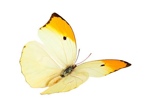 Butterfly picture id525877120?b=1&k=6&m=525877120&s=612x612&w=0&h=e ontzz9f8j5bj39sgjuaqlzv59wcm17qkafiytzrze=
