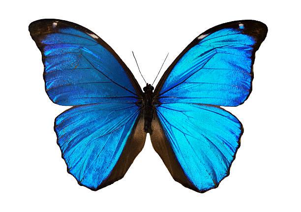 Butterfly picture id537760811?b=1&k=6&m=537760811&s=612x612&w=0&h=e4kkekytyzupbbbhctxpap8frzfhkf3mx078agvtbfa=