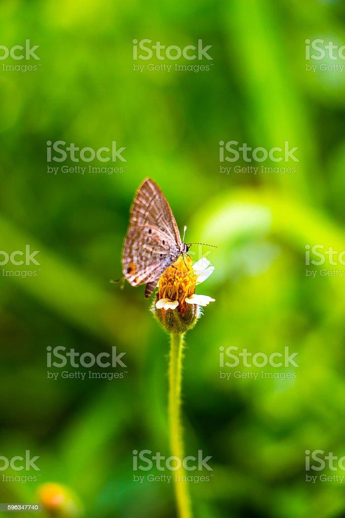 Butterfly -  Lizenzfreies stock-foto