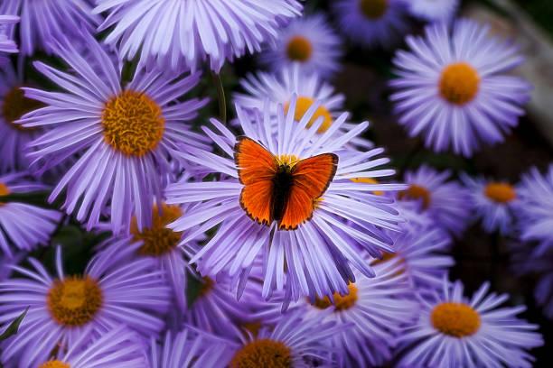 Butterfly picture id619745830?b=1&k=6&m=619745830&s=612x612&w=0&h=mzqglm iksal7 qvg 4dkfo wg017mwclirs70tvegq=