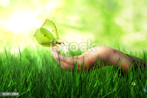 istock Butterfly 623612858