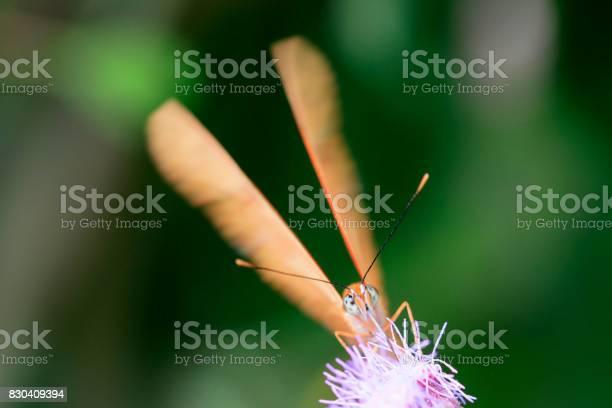 Butterfly picture id830409394?b=1&k=6&m=830409394&s=612x612&h=3m5 rdsxfh1krrw3lxjsajqp4cvfxbj0jzpsc3udhng=