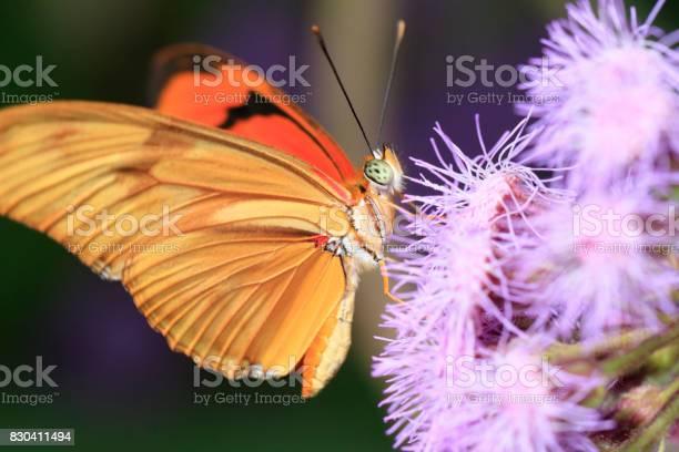 Butterfly picture id830411494?b=1&k=6&m=830411494&s=612x612&h=t2tgagducy3iqorf4uut7e3noenwsts7kzyhtiky26w=