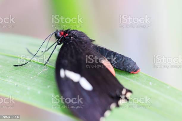 Butterfly picture id830412220?b=1&k=6&m=830412220&s=612x612&h=a6s2lvftbhhn5qis38rcwft7k86glq nbzvqo vk5fa=