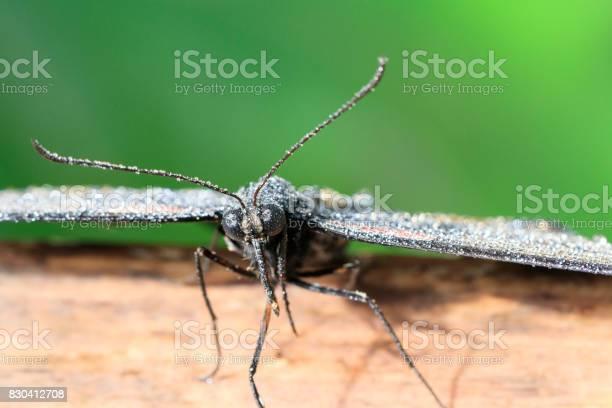 Butterfly picture id830412708?b=1&k=6&m=830412708&s=612x612&h=ukjqiexc9qb1mwpu8xo15yq3iklzwsvo6s  1kbm3ua=