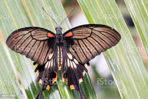 Butterfly picture id830413360?b=1&k=6&m=830413360&s=612x612&h=yaqwzl7wupoh c2txjnca375oymfbneivwmpmazvkry=