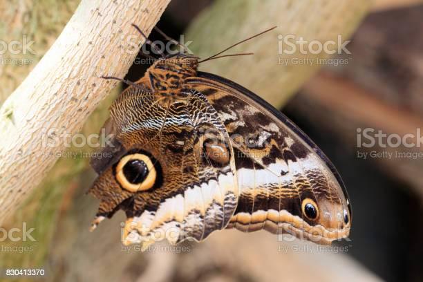 Butterfly picture id830413370?b=1&k=6&m=830413370&s=612x612&h=kxmkehxfzxo49yo7zzoknuhltfjfwth0z8kkesqvm i=