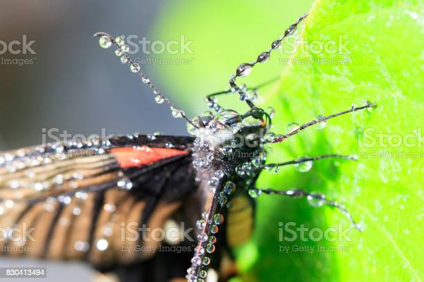 Butterfly picture id830413494?b=1&k=6&m=830413494&s=612x612&h=77vbm8rcrks dp07xfu2 zmpuryglevgtns98fhwb9a=