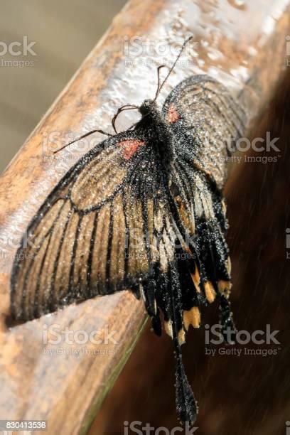 Butterfly picture id830413536?b=1&k=6&m=830413536&s=612x612&h=loywxjl0ci0qkpjtoqdosnqqvb41rcz xqn x fhwqm=