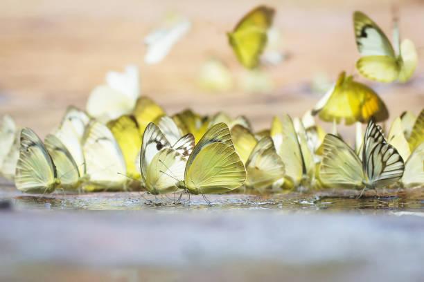 Butterfly picture id847311354?b=1&k=6&m=847311354&s=612x612&w=0&h=c79nfs4ll z6krgwn8cqb2fvbyx9fdp 89iu12dofy8=