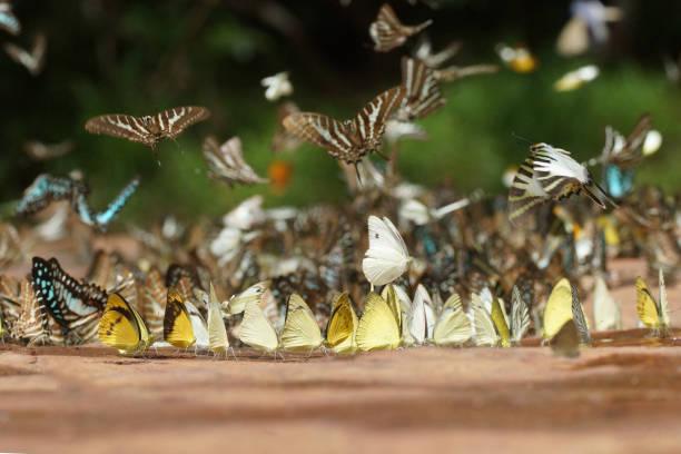 Butterfly picture id847311536?b=1&k=6&m=847311536&s=612x612&w=0&h=ld74cox0ykkc6iu2y1dlhl5iajwp9xc4 ghkukrlung=