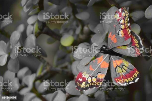 Butterfly picture id884801076?b=1&k=6&m=884801076&s=612x612&h=jyytbhe3zpe q2vxwqpobksbkecqh1anqfl5axuk1wy=