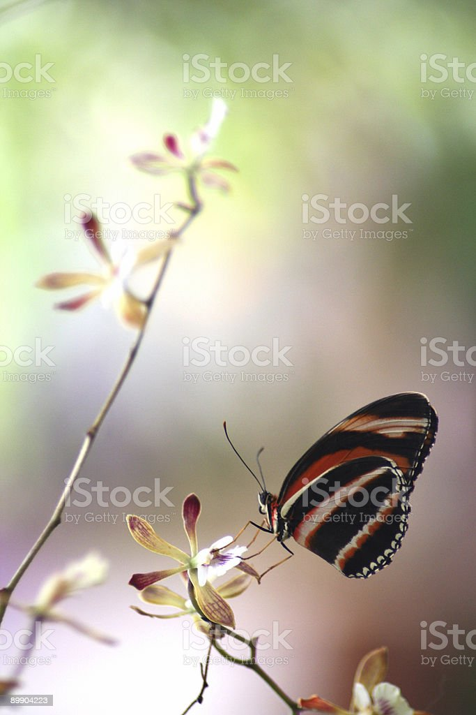 Butterfly royalty free stockfoto