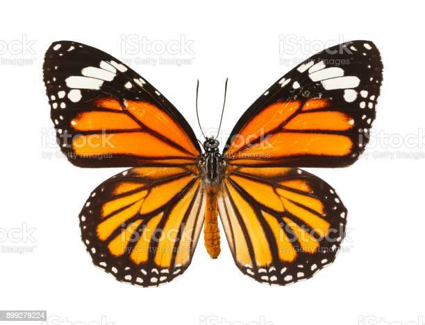 Butterfly picture id899279224?b=1&k=6&m=899279224&s=612x612&h=e9dqv7msmvwoqdfawtreubjjm6y1kzn6gzsizqhug5o=