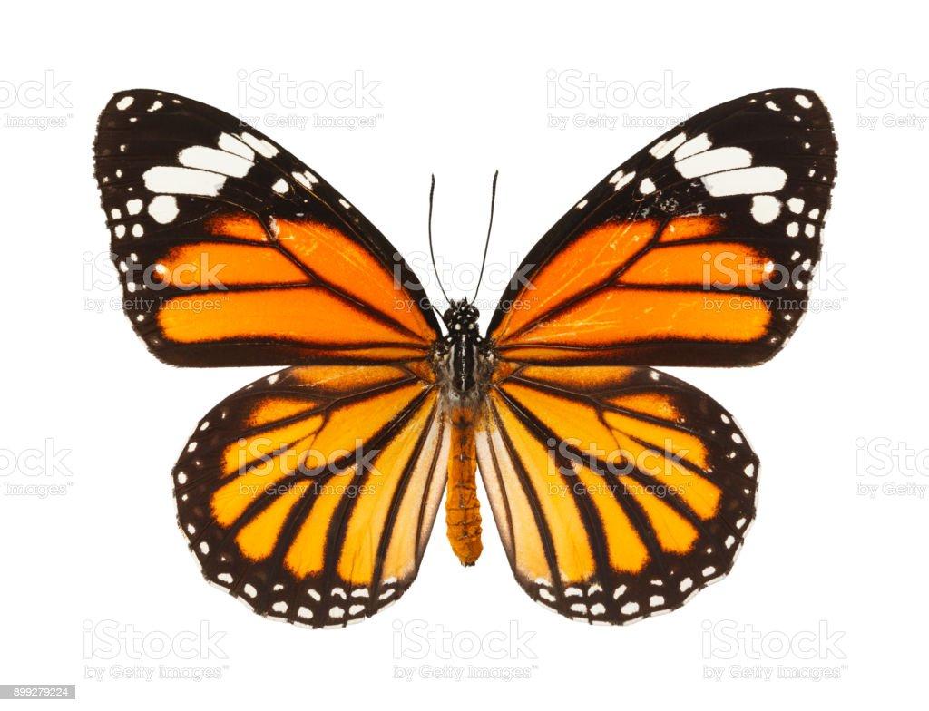 Butterfly - fotografia de stock