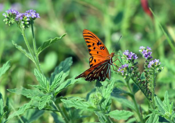 papillon - organisme vivant photos et images de collection
