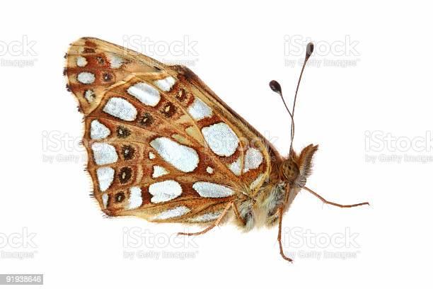 Butterfly picture id91938646?b=1&k=6&m=91938646&s=612x612&h=zbru ltd9enskwy  zhiaa jrqsx0d0fhlnt5hwn0ye=