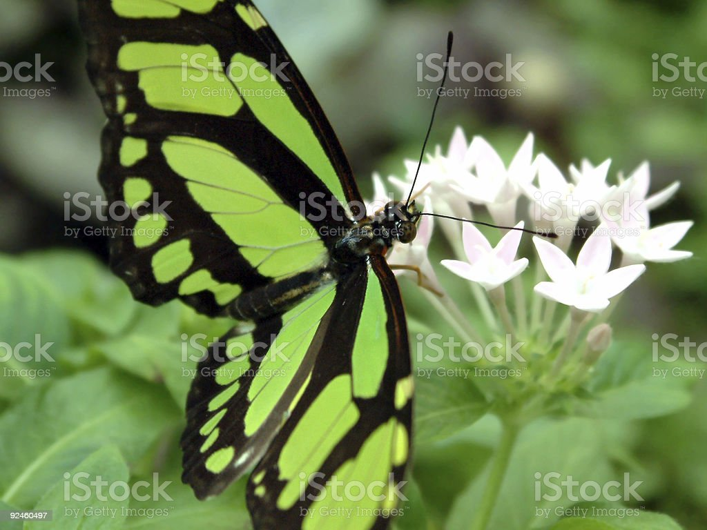 butterfly #5 royalty-free stock photo